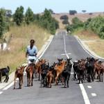 Estrada das Cabras, por Luís Gonçalves. Alvito, Alentejo.