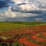 As cores da agricultura, por João Gomes. Évora.